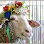 KİEV 32.ULUSLARARASI AGRO 2020  TARIM FUARI GEZİSİ