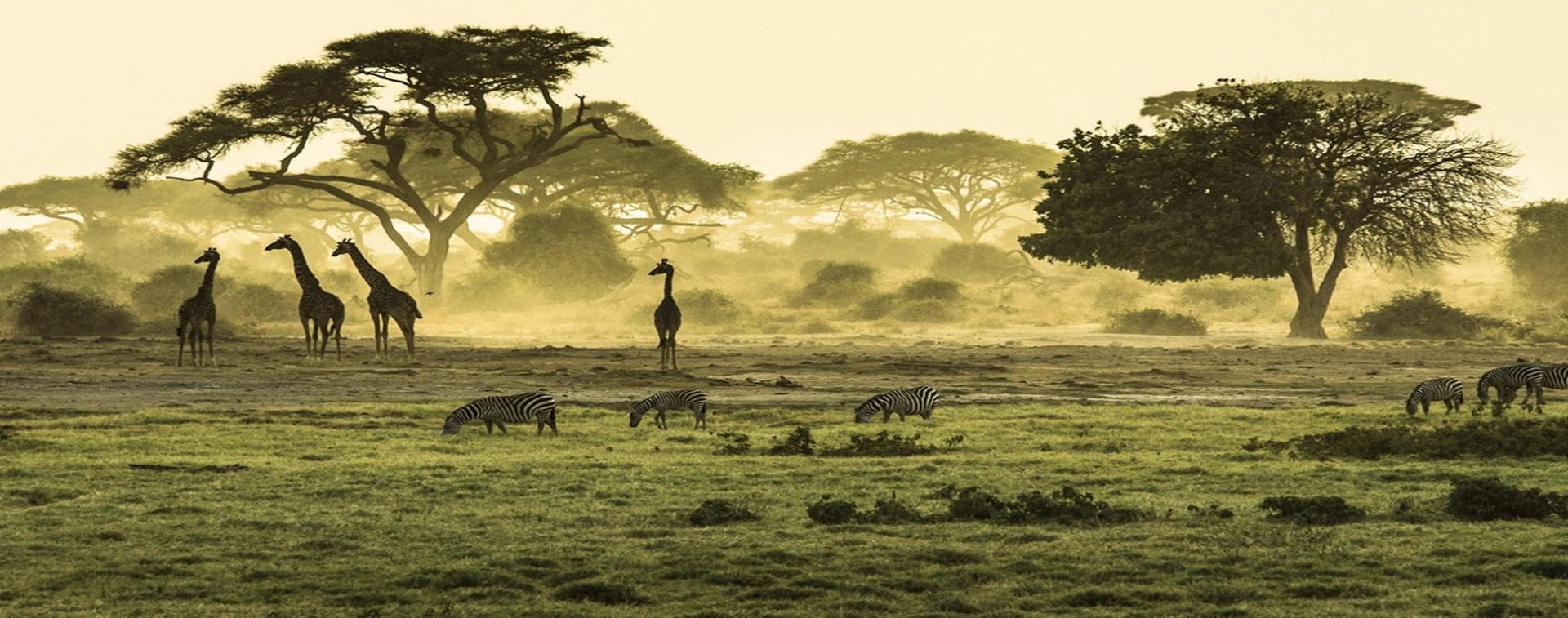 AFRİKA TURLARI